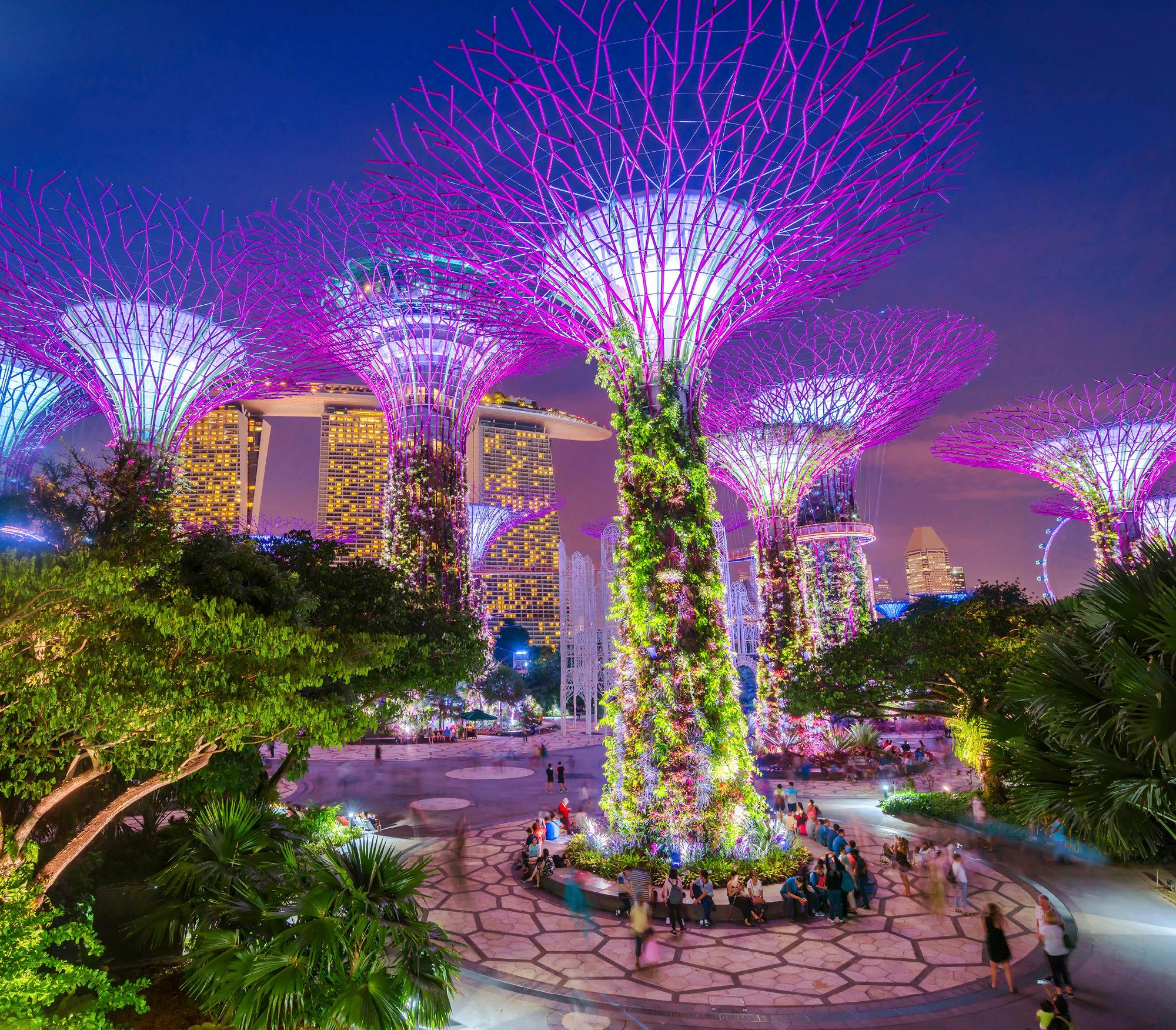 Singaporen Gardens by the Bay -puistossa on 25–50 metriä korkeita, puumaisia rakennelmia. Alueen nimi on Supertree Grove. Kuva: iStock